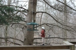 Click to enlarge. Find the Hairy Woodpecker, Chickadees (5 of them).
