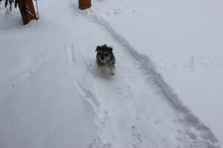 IMG_4463 02-13-2016  running in snow